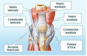 TENDINITE ROTULEA (ginocchio del saltatore)